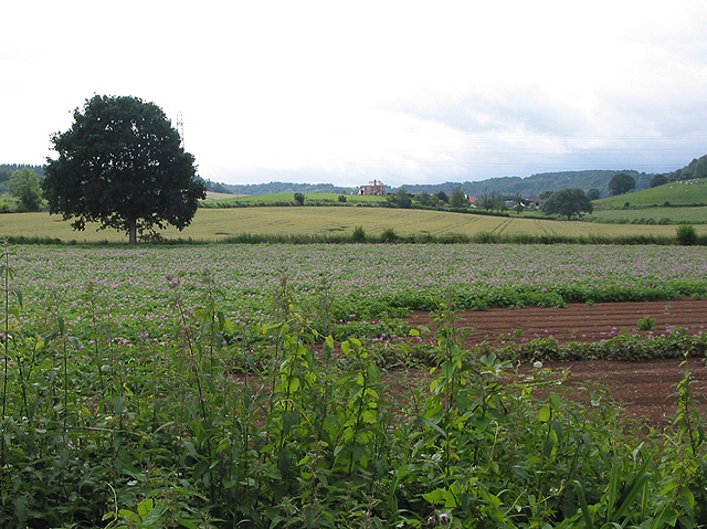 Potato field on Pontshill to Coughton road