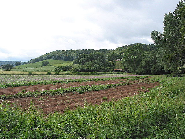 Potato field on Pontshill to Coughton road