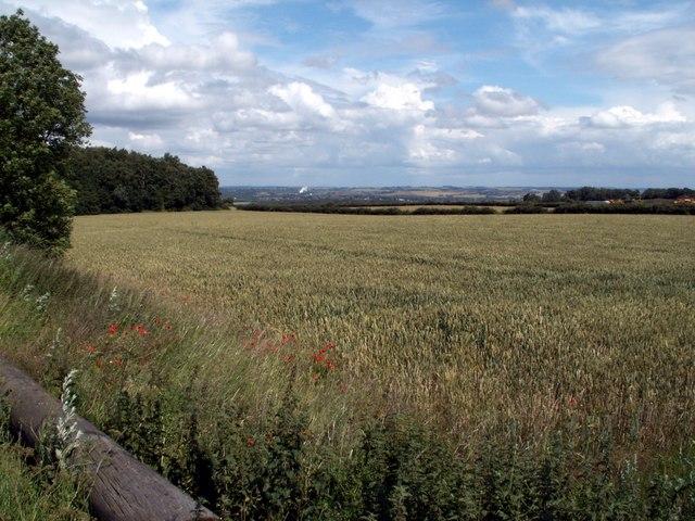 Cornfield & Sky