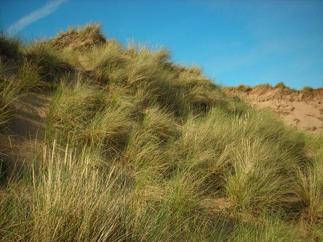 North End Dunes