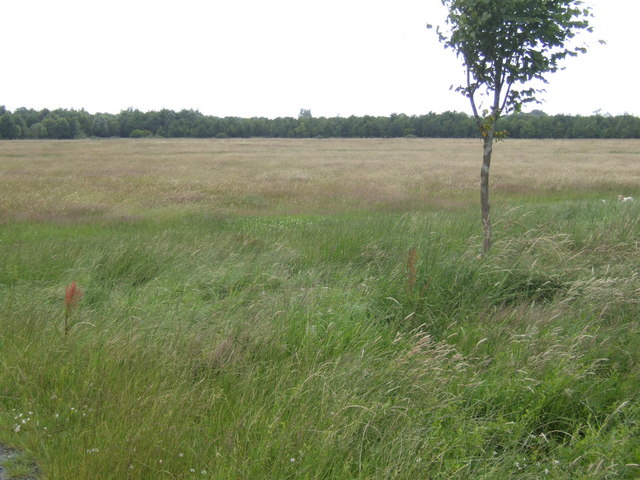 Westerleigh Common