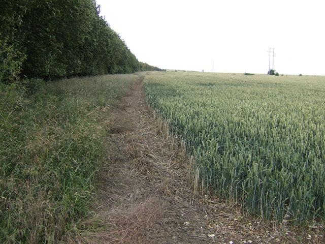 Field and wood near the A303