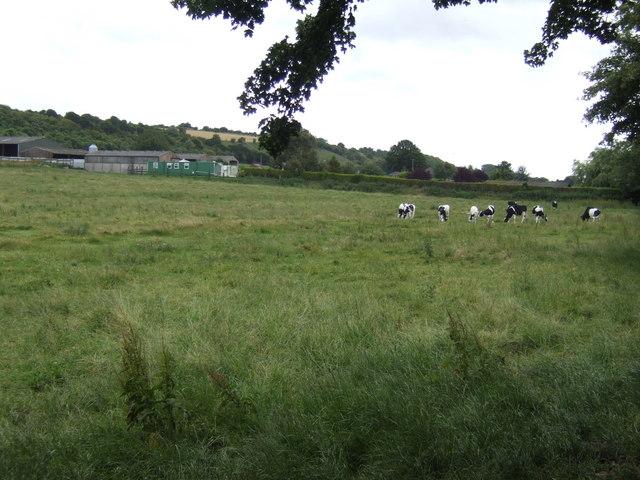 Dairy farm north of Pitton