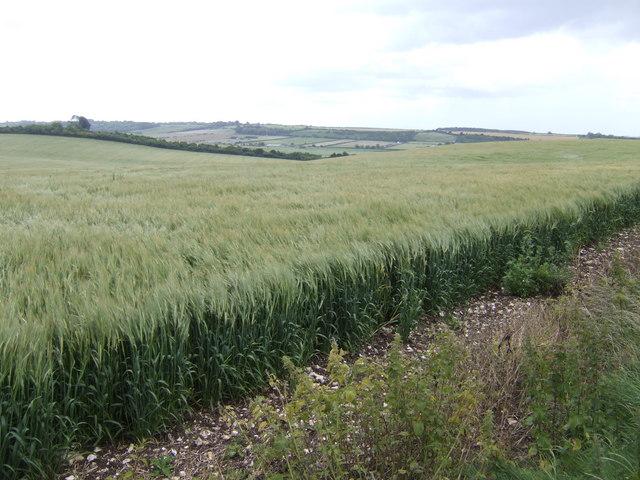 Downland east of Salisbury