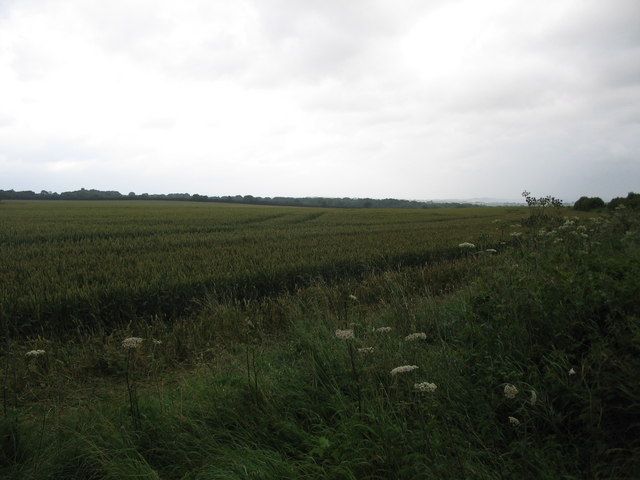 Cropland off the A361