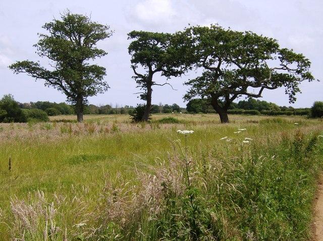 Trees near Birchmore Farm