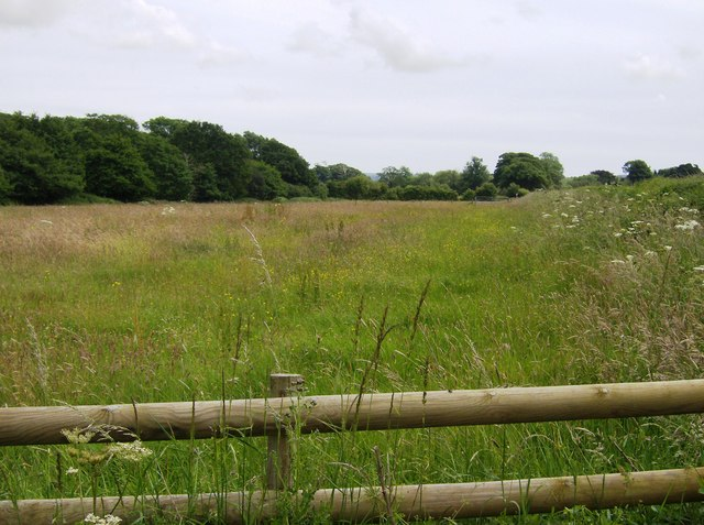 Meadow near Blackwater