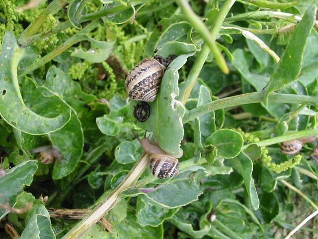 Snails devour some vegetation
