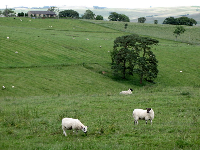 Pastures below Warksfield Head