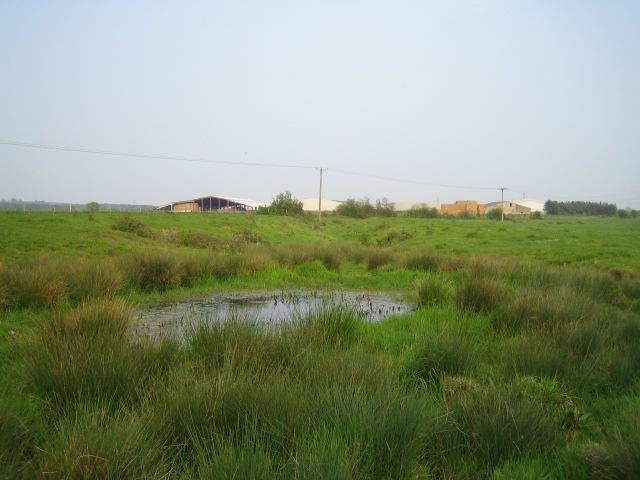 Pond bay near Greatmoor 2