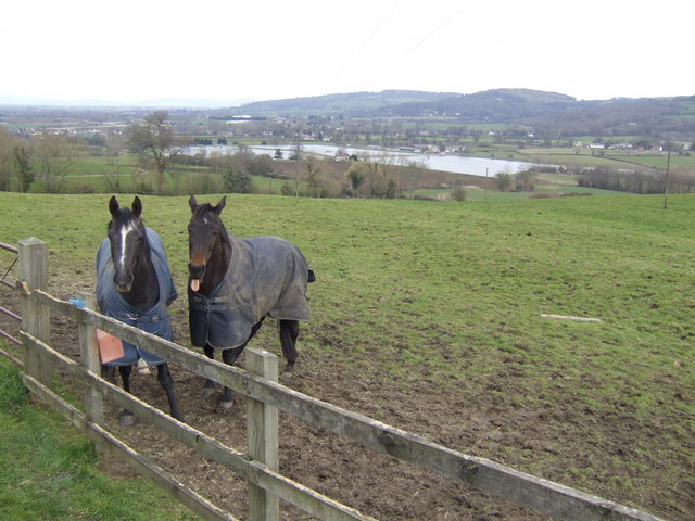 Horses in a paddock with a view