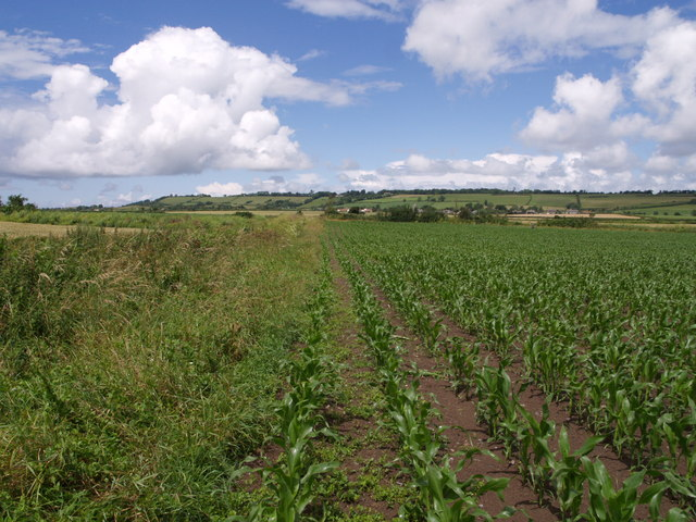Footpath to Greinton