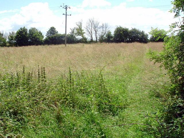 Meadow l