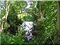 TL1170 : Hidden stream by Les Harvey