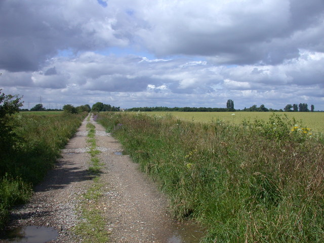 Hurdlehall Drove and wheat fields