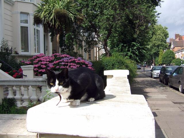 Cat with hydrangea, Belsize Park