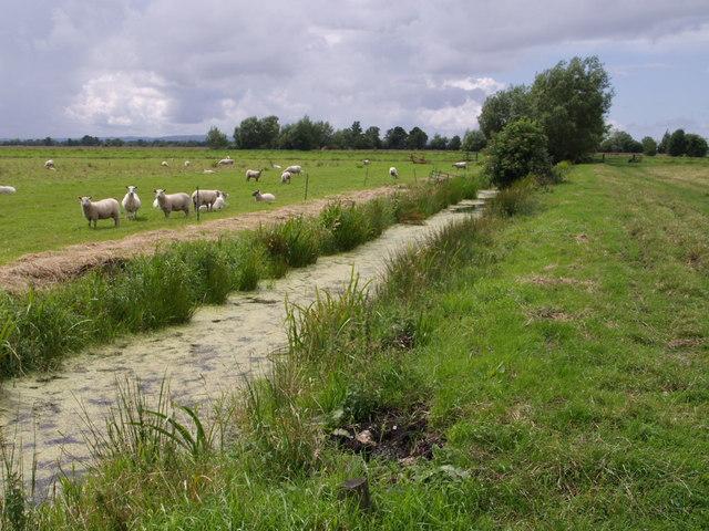 King's Sedge Moor