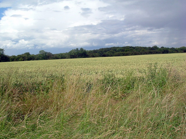 Looking north  to Brampton wood