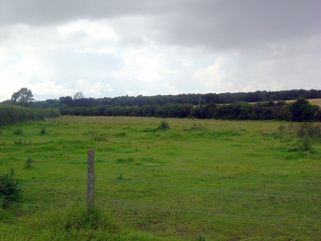 View northwest to Brampton wood