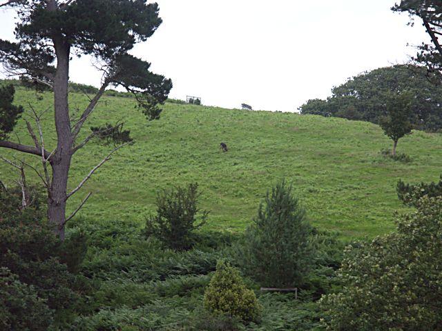 Tregothnan Deer Park.