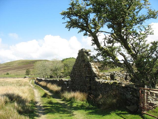 Ruined cottage alongside the mine track at Dolddinas