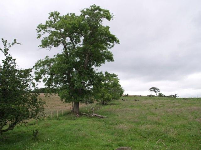 Field boundary near Knockhill