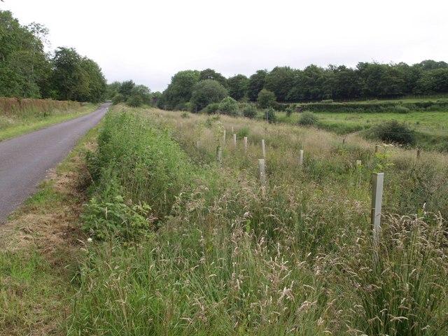 Lane and railway cutting