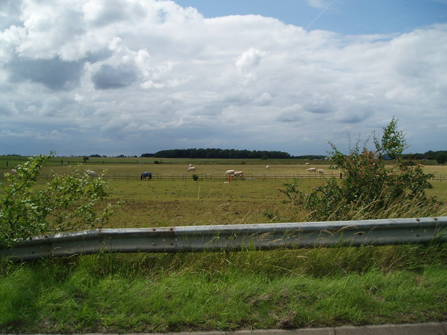 Grazing land near Beltoft
