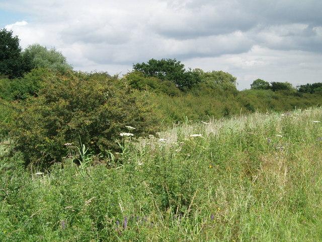 The hedgerow alongside the A18