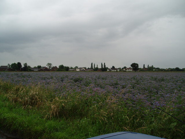 A borage field with Belshaw in the background