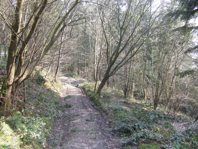 Track through Cwmsirhwy Wood