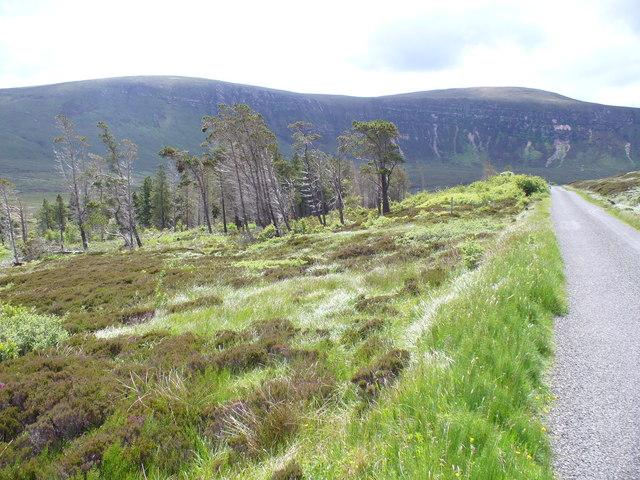 Woodland in North Hoy
