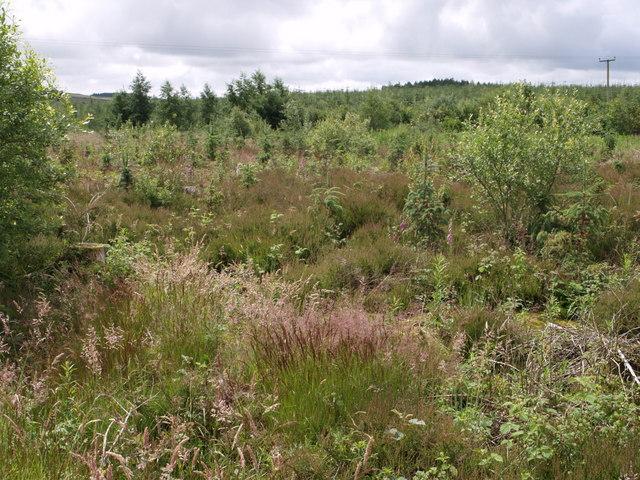 Hallmuir Plantation