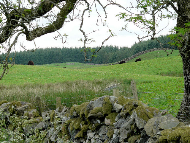 Grazing land on Lochurr Farm