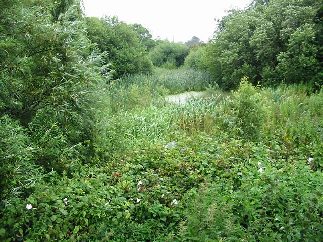 Buttsole Pond, Eastry