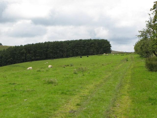 Track, pastures and plantation near Ravenshaugh