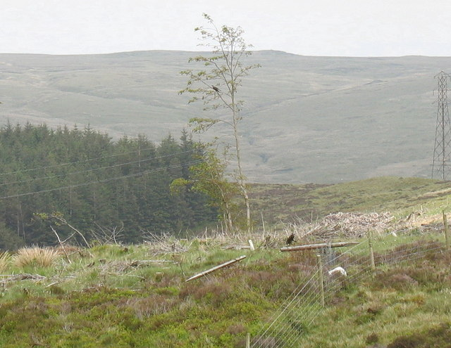 A cuckoo gives a bravura performance from the only tree in a stretch of clear fell
