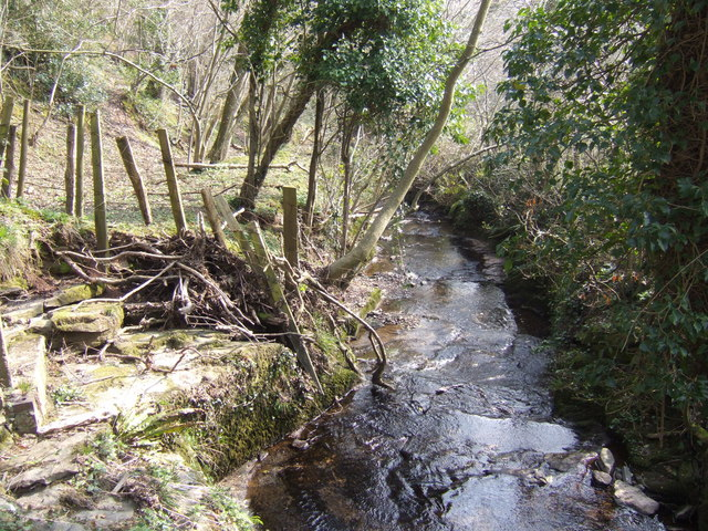 Pentre Coed Dingle - view downstream