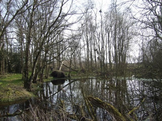 Pond near Trenewydd