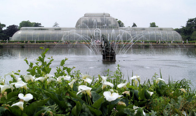 Palm house and fountain with lilies in foreground.