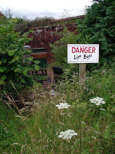 Danger: Live Bees