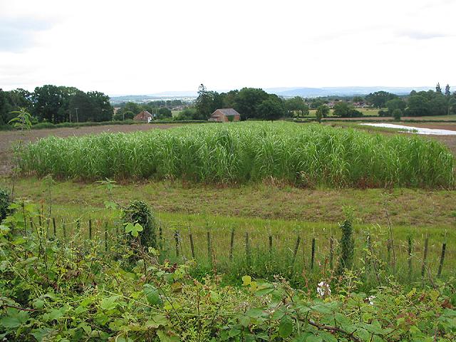 Crop field at Huntley