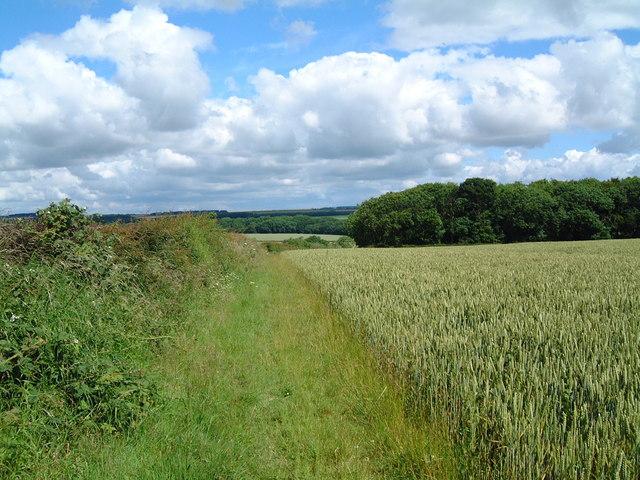 Path across Nafferton Wold