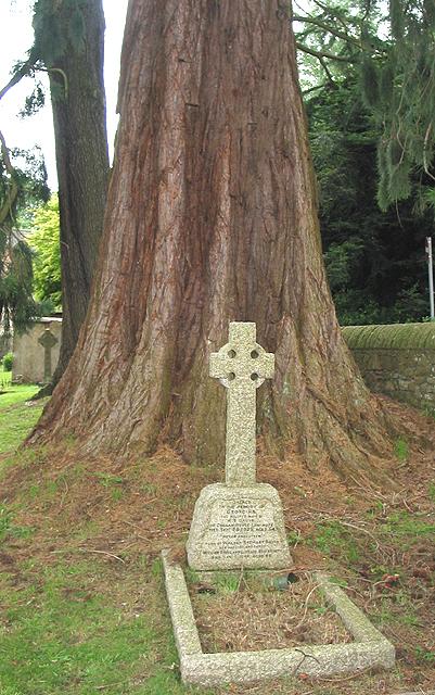 Huge tree base, Churchyard of St. John the Baptist
