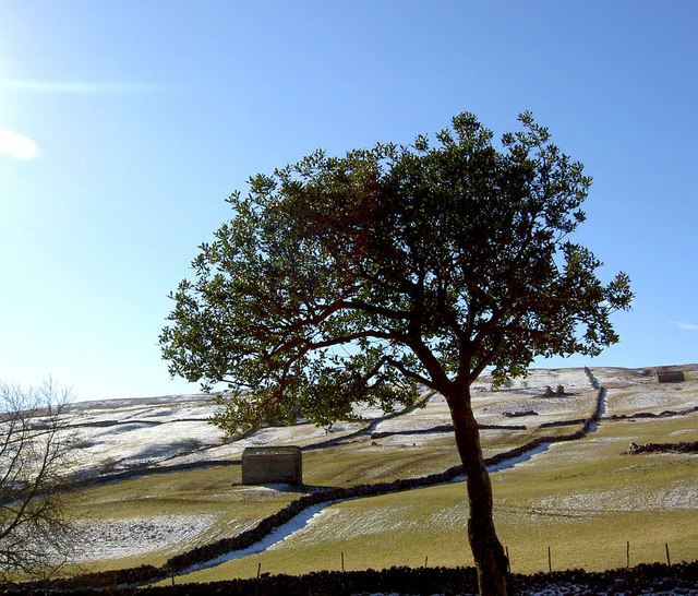Tree in Yorkshire Dales.
