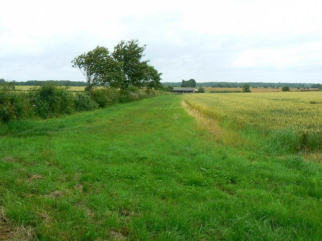 Field margin, near Little Badminton