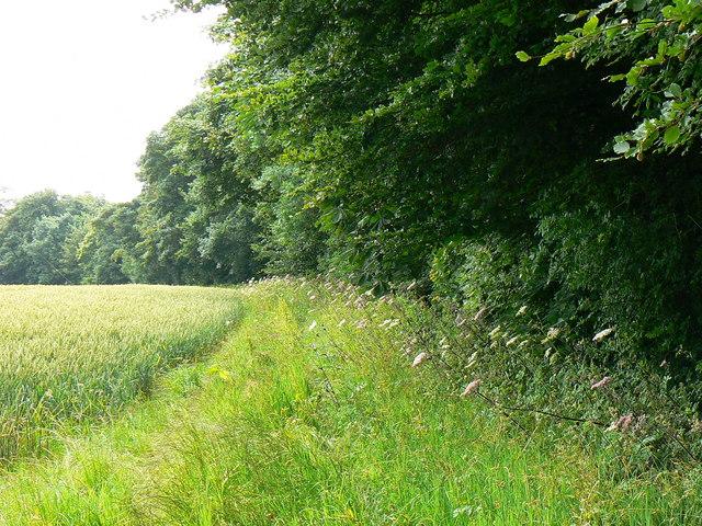 Field margin, near Badminton