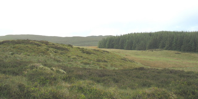 View west past the forest towards a distant Foel Fawr