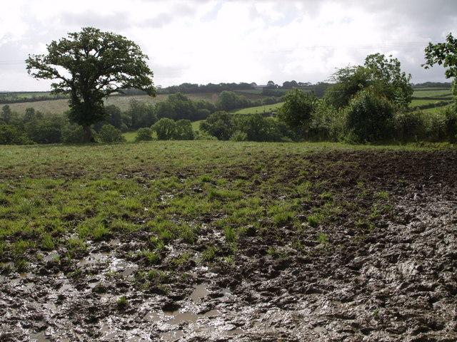Field near Lower West Kimber