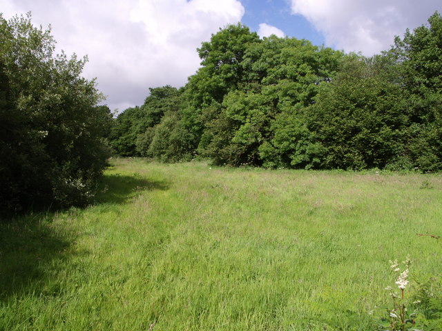 Field beside the West Lew